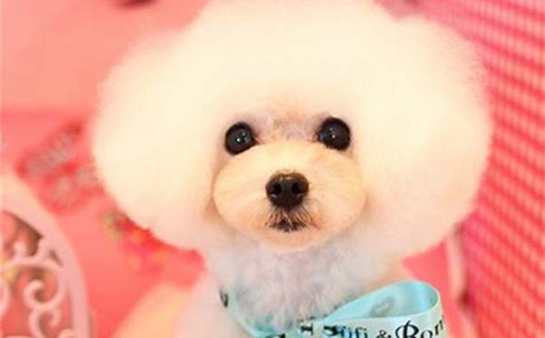 宠物美容师C级标准班