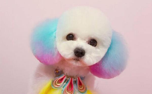 栾城宠物美容师创意染色班