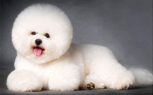 沧州宠物美容师专业赛级班