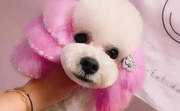 正定宠物美容师培训学校