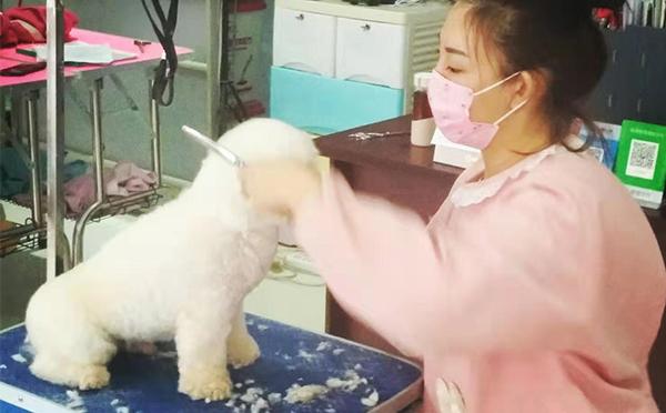 宠物美容培训班