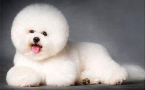 河北宠物美容师专业赛级班
