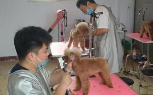 石家庄宠物美容培训