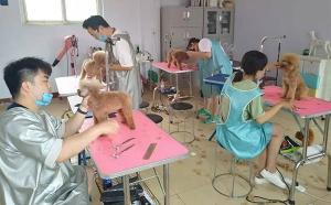 石家庄宠物美容师培训