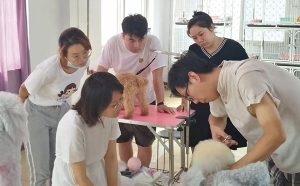 石家庄宠物美容学校