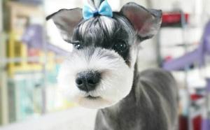 宠物美容学习培训