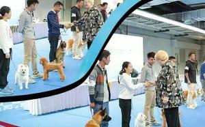 宠物培训学校